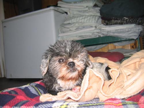 mabel in fleece
